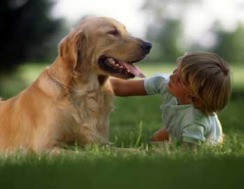having pets for child New research suggests that having a dog may reduce the risk of asthma, and other studies have shown that children with pets have fewer colds but there are downsides.