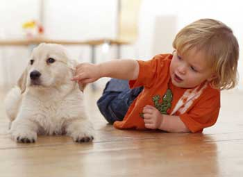 toefl treating pets like family members Pets play a vital part in our lives they live with us in the same house and  sometimes protect us from dangers although some people act cruel.